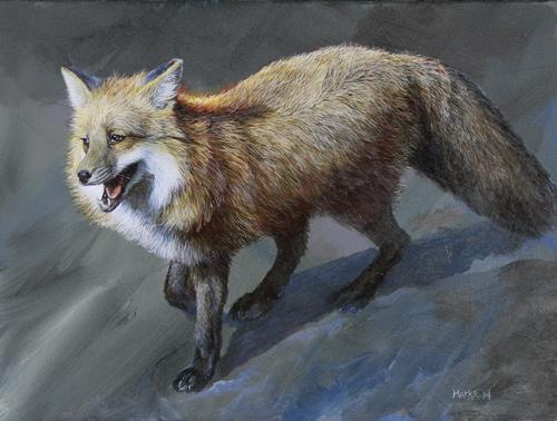 fox-graysnow